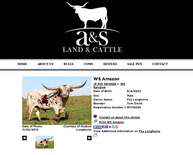 A&S Land & Cattle animal