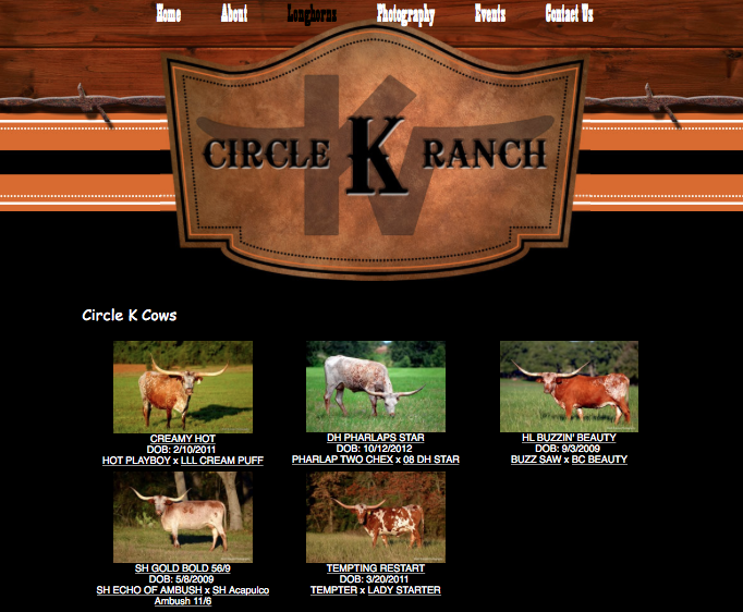 Circle K Ranch - cows