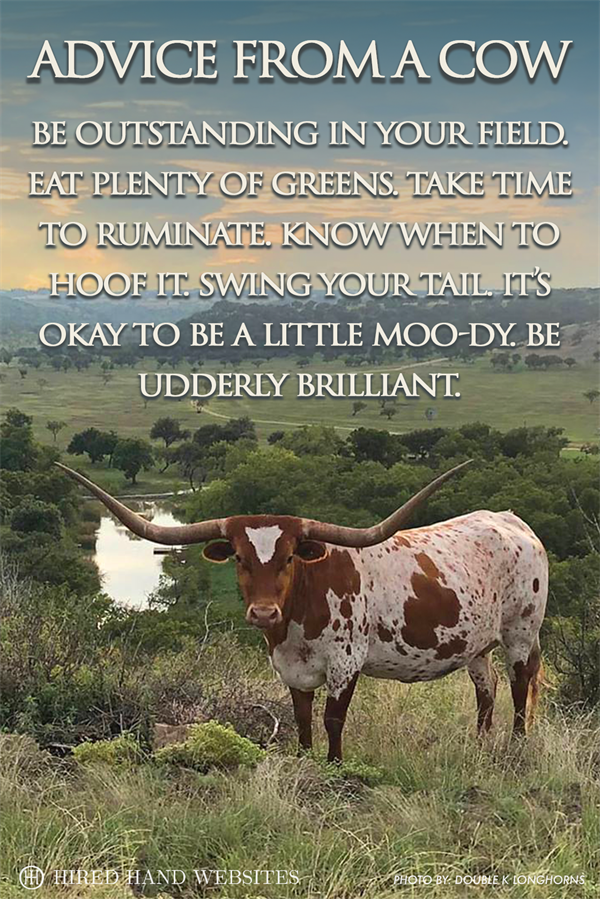 Cow Advice - Facebook