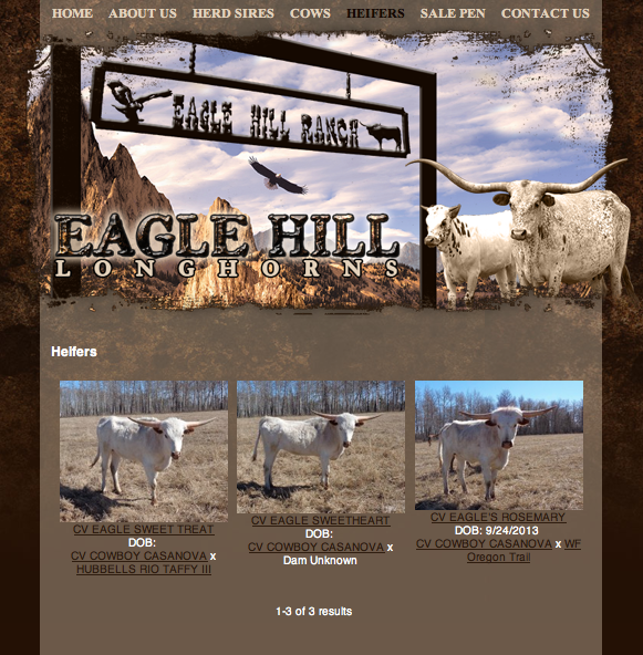 Eagle Hill Longhorn Ranch - heifers