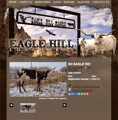 Eagle Hill Longhorn Ranch