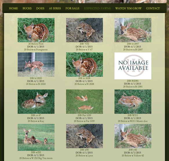Fawns page