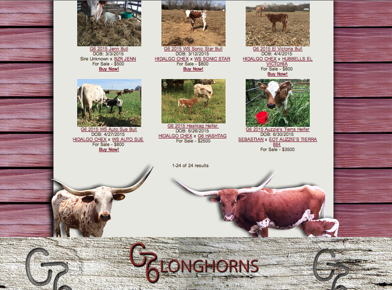 G6 Longhorns herd