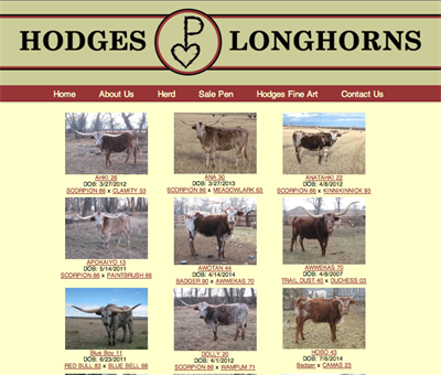 Hodges Longhorns herd