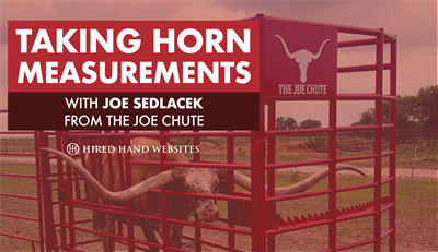 Horn Measurements with The Joe Chute