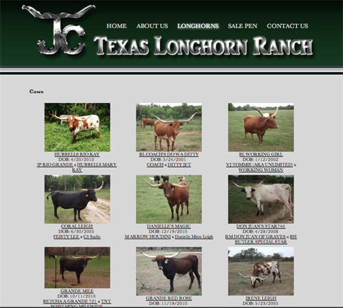 JC Texas Longhorn Ranch-herd