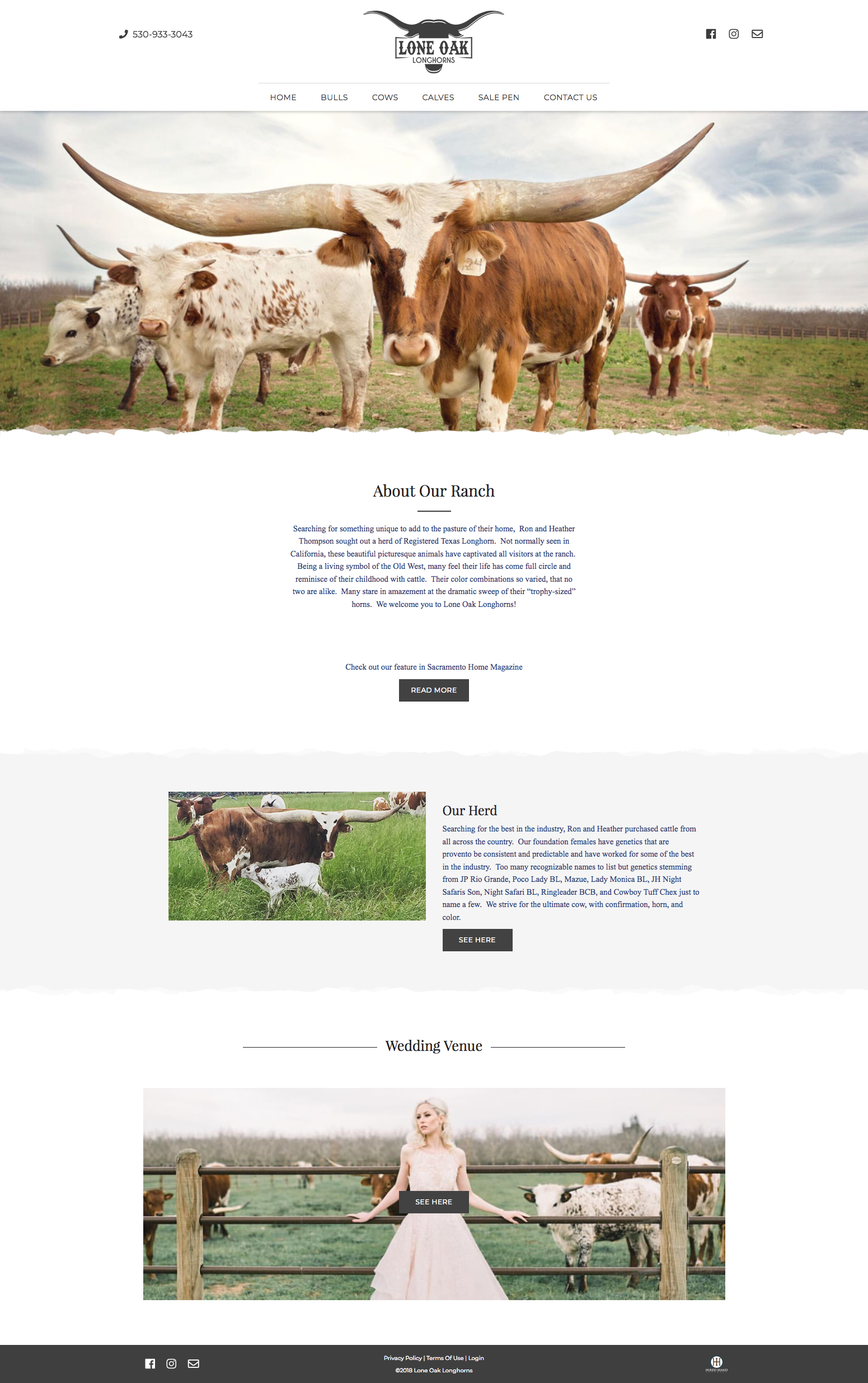 lone-oak-longhorns_homepage