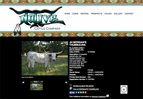 Native Cattle Co-animal