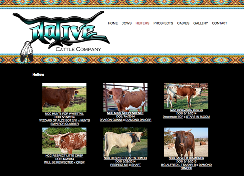 Native Cattle Co-herd