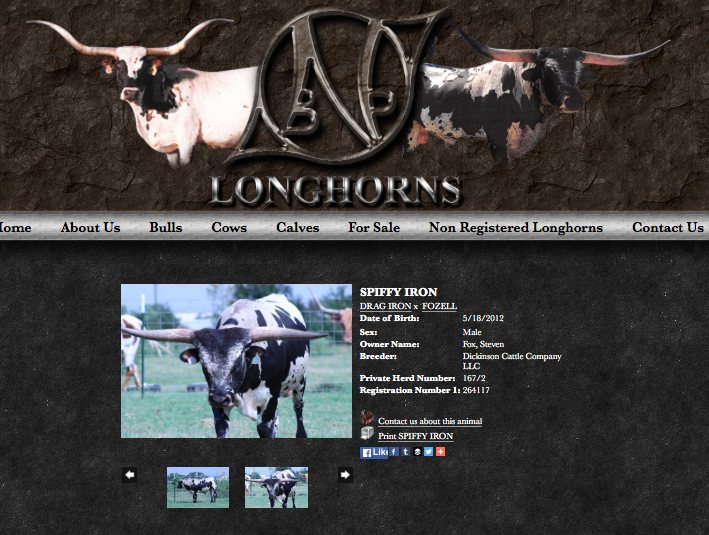 NBP Longhorns - Animals