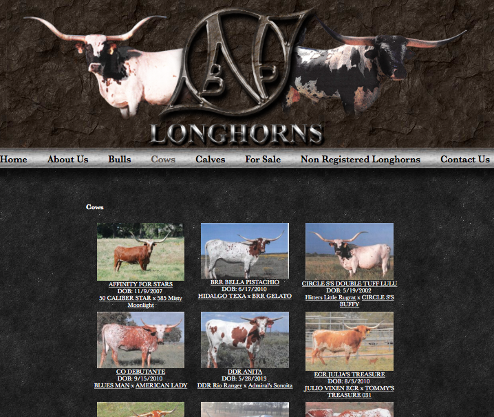 NBP Longhorns - Cows