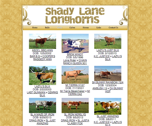 Shady Lane Longhorns