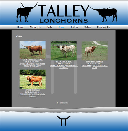 Talley Longhorns-herd