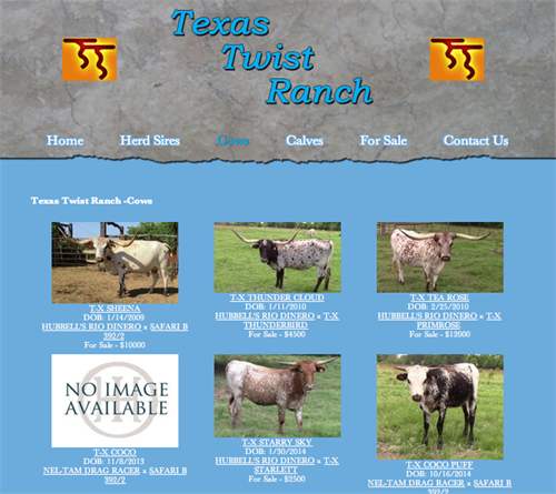Texas Twist Ranch - herd