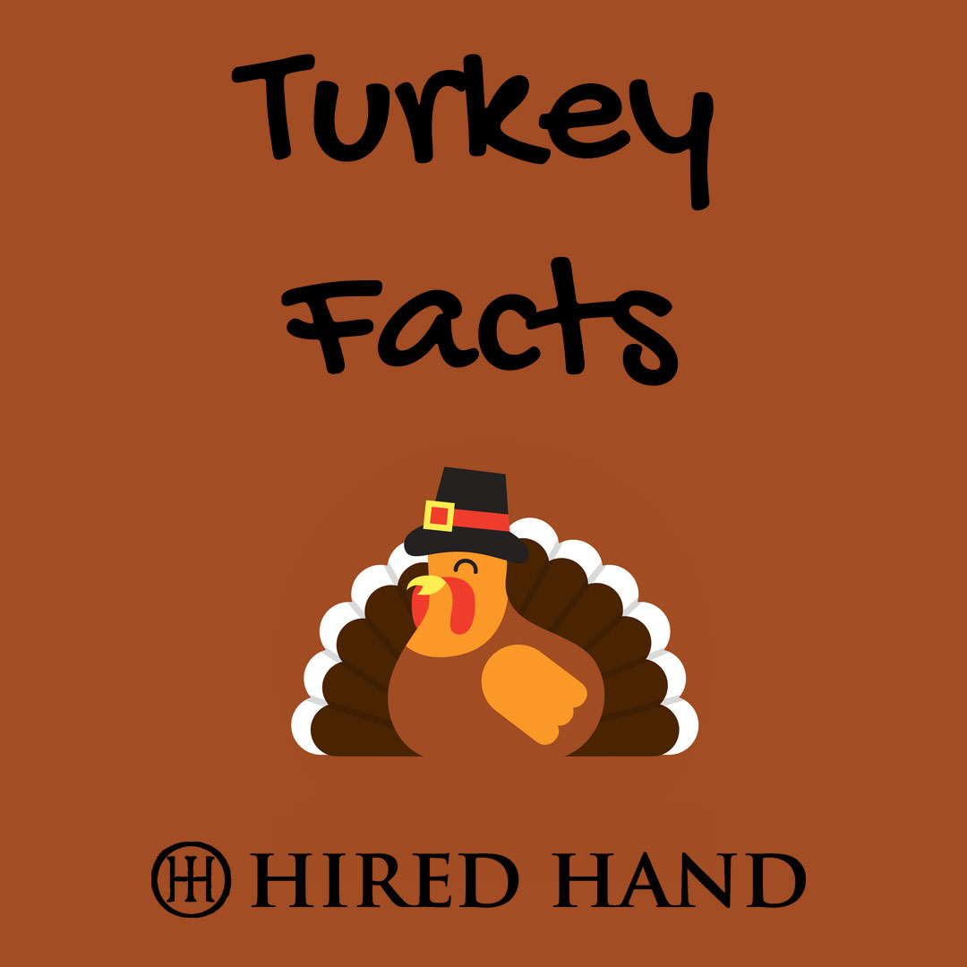 Turkey-facts